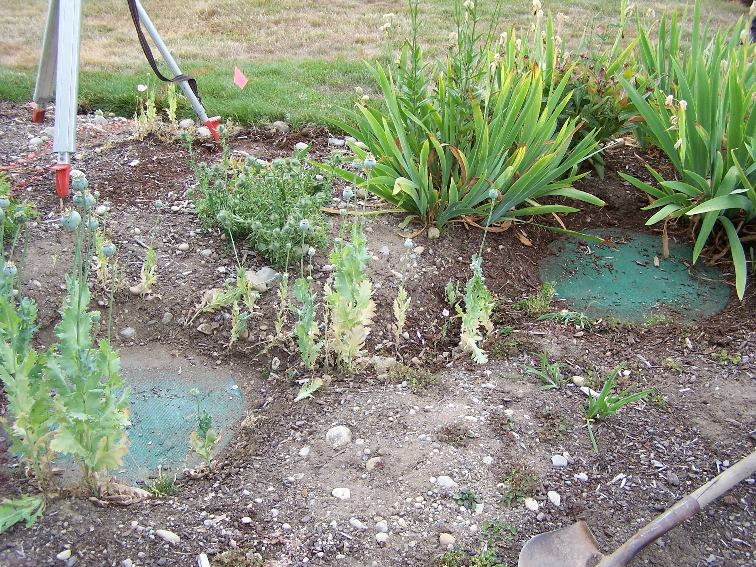 Landscaping Over A Septic Tank : On how your septic system works and to find tank lids